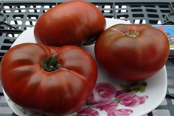 Томат черный мавр: отзывы, фото, урожайность | tomatland.ru