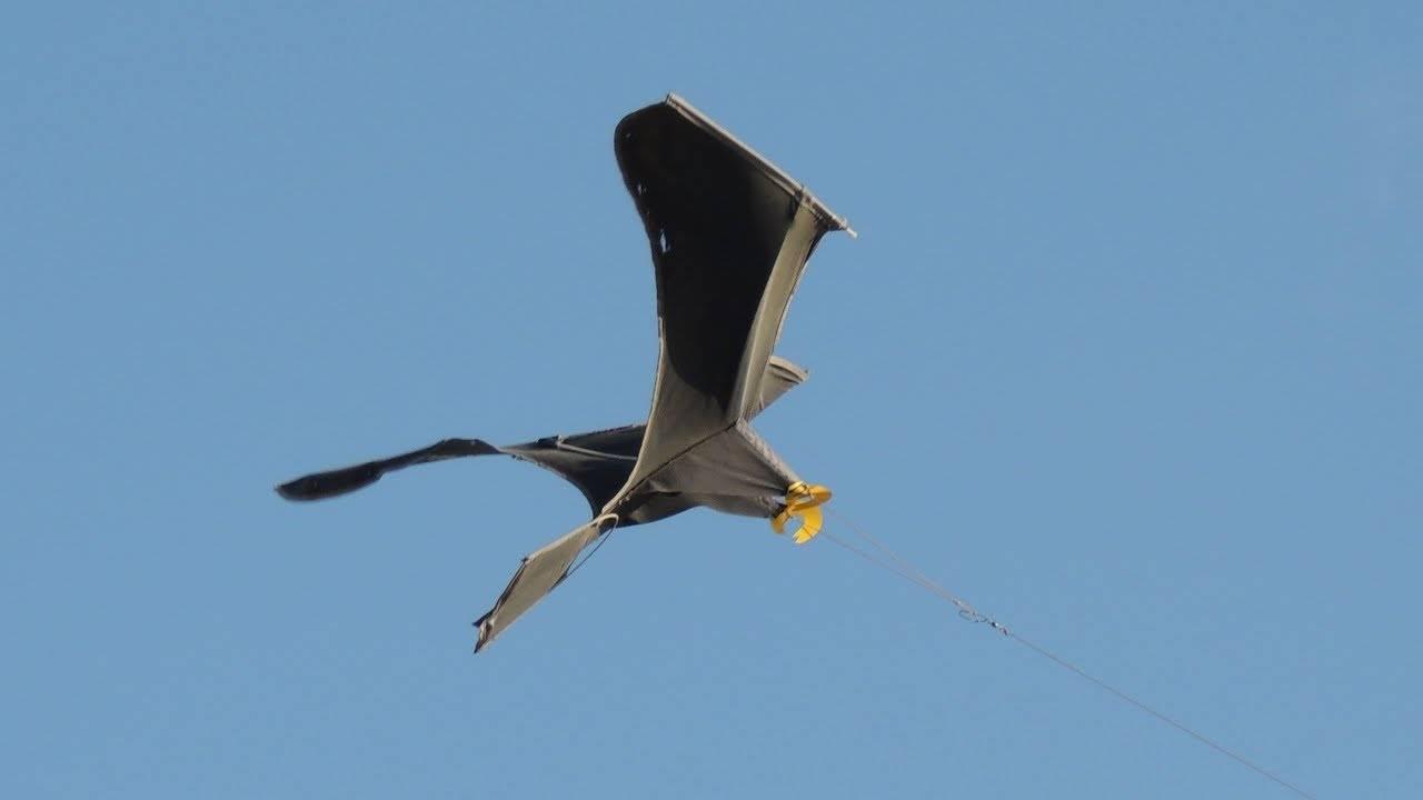 Отпугиватель птиц своими руками для дачи или огорода