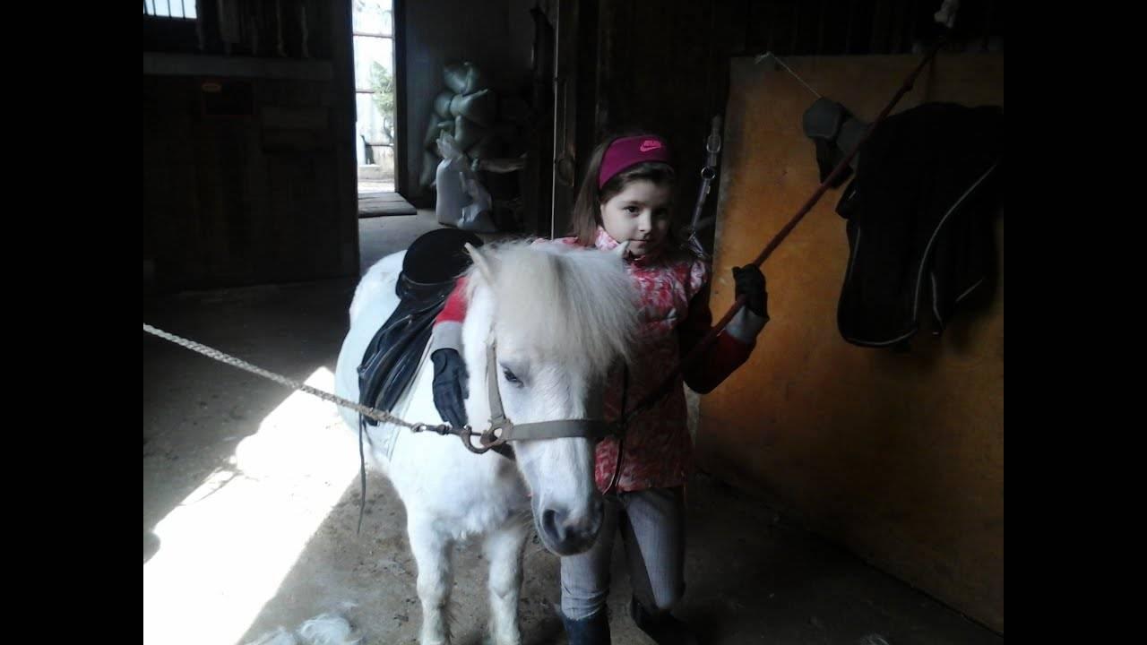 Любимые с детства лошадки-пони — какими они бывают?