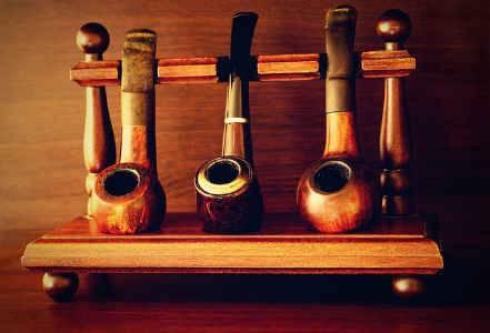 Выращивание курительного табака — ботаничка.ru