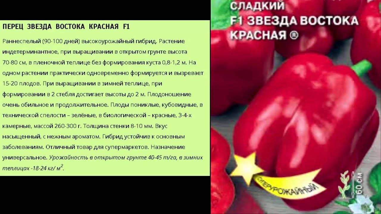 """Перец """"звезда востока"""": характеристика сорта, описание, отзывы, урожайность"""