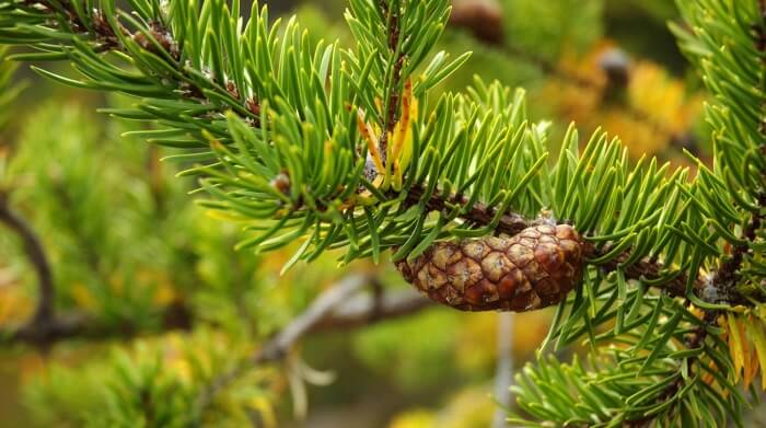 Сколько лет живут деревья – сроки жизни разных деревьев