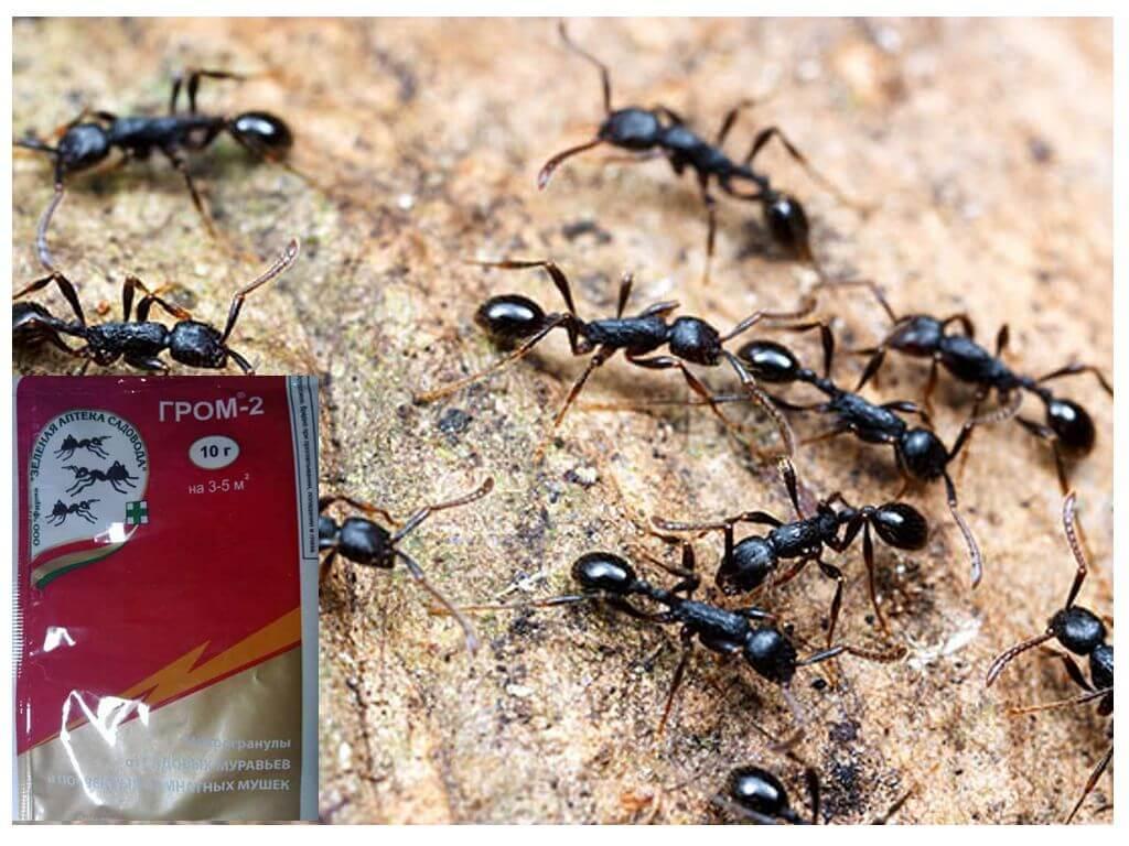 Как бороться с муравьями в теплице: химические и народные средства