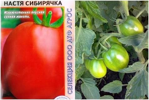 Томат настенька: характеристика и описание сорта, урожайность с фото