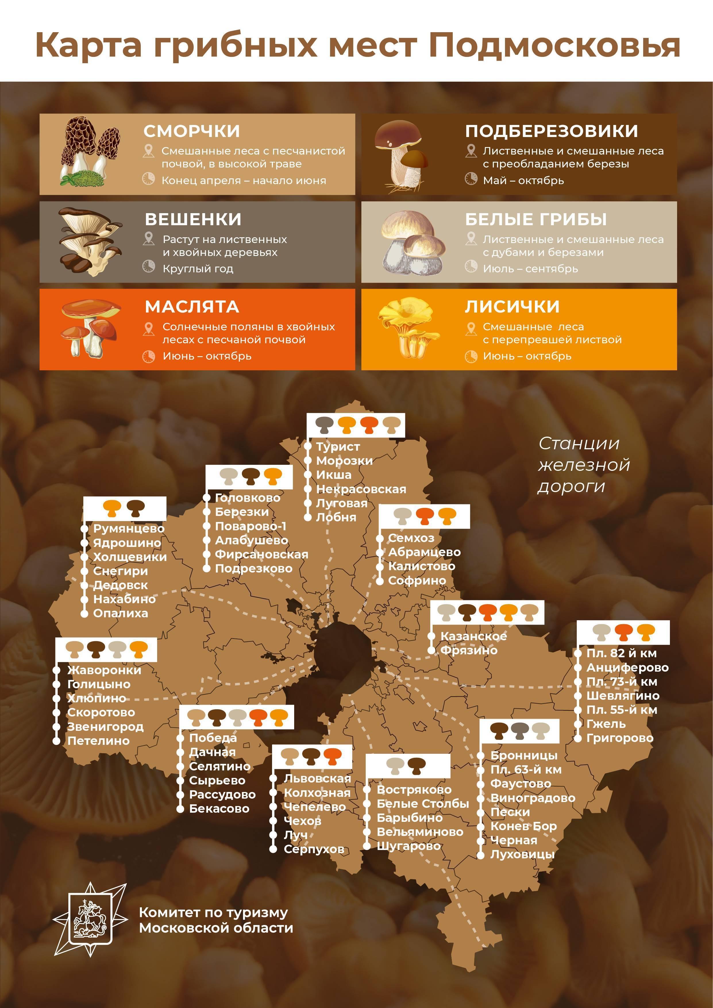 Популярные грибы в Костроме