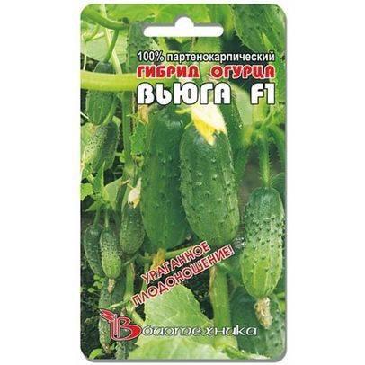 Холодостойкий сорт с сверхранней отдачей урожаев — огурец вьюга f1: полное описание гибрида