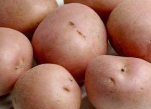 Картофель романо — описание сорта, фото, отзывы, посадка и уход