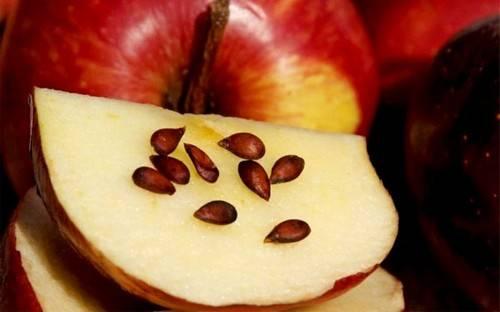 Полезны ли косточки от яблок, можно ли их есть