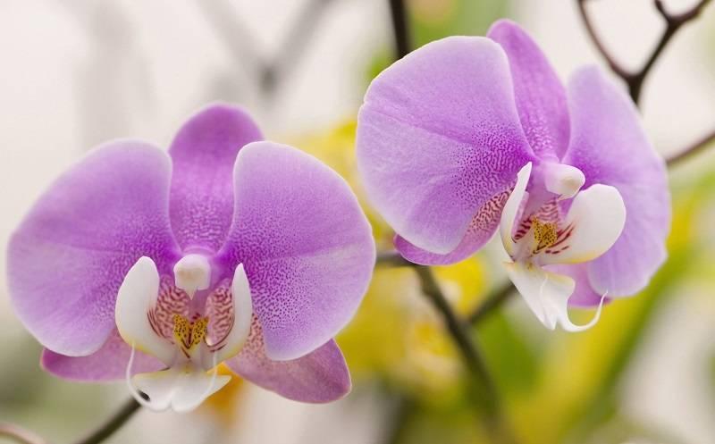 Болезни орхидей и их лечение, профилактика здоровых растений