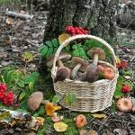 Как яды, радиация исоли тяжелых металлов превращают грибы вотраву