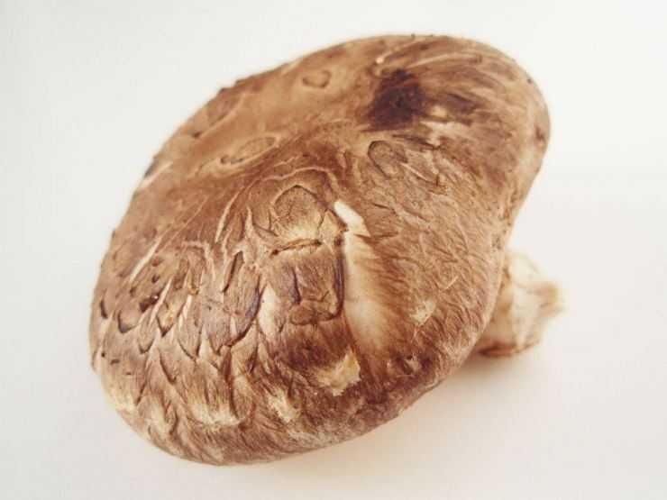 Полезные свойства гриба шиитаке, противопоказания, применение при лечении рака и других заболеваний