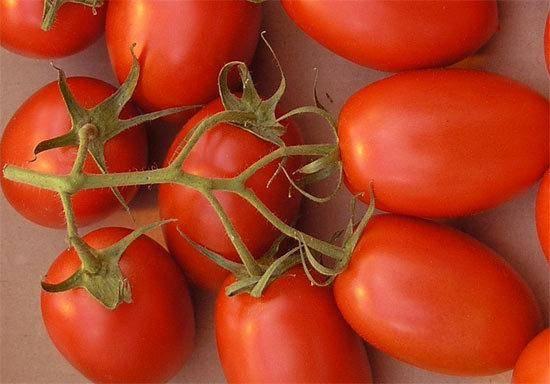 Томат рома: характеристика и описание сорта, отзывы, урожайность, фото