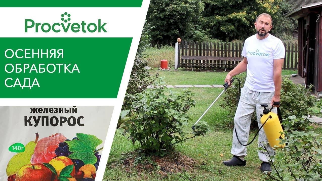 Как развести железный купорос для обработки растений, инструкция по применению