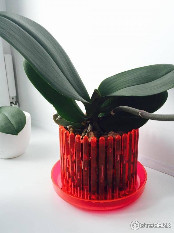 Какой нужен горшок для орхидеи selo.guru — интернет портал о сельском хозяйстве