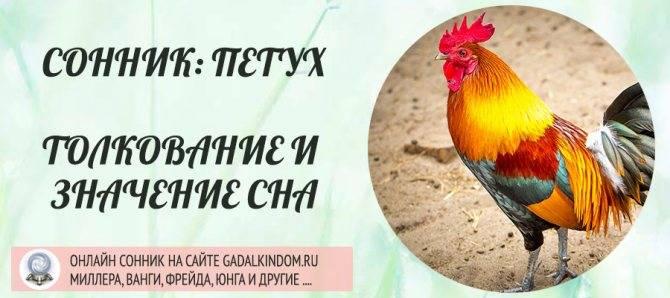 К чему снятся помидоры: сон у женщины и мужчины — selok.info