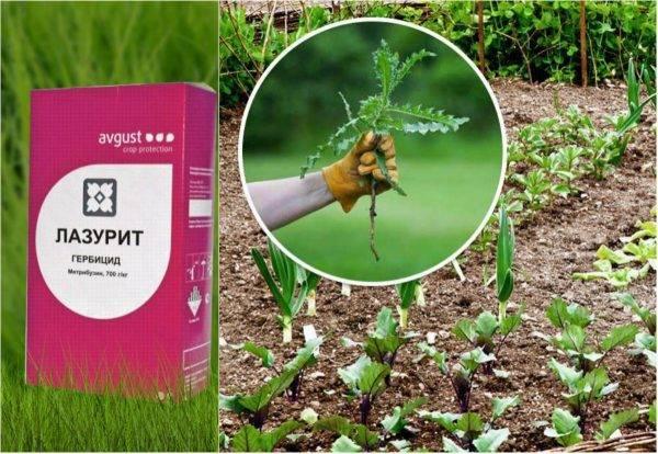 Средство от сорняков лазурит: инструкция по применению