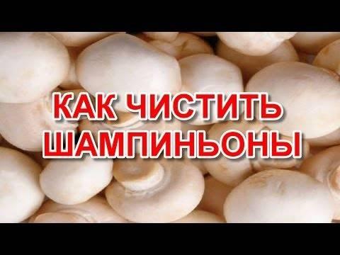Как чистить свежие грибы шампиньоны: видео