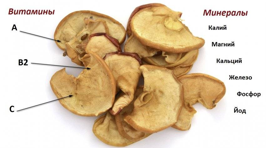 Сушеные яблоки — польза и вред для здоровья