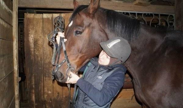 Седловка лошадей: подготовка животного, последовательность седловки, управление лошадью, фото