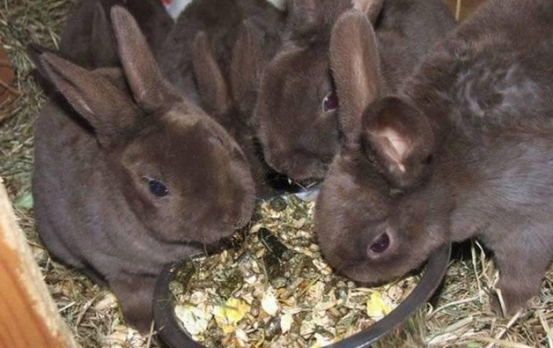 Чем лучше кормить кроликов для быстрого роста и веса, топ 5 стимуляторов