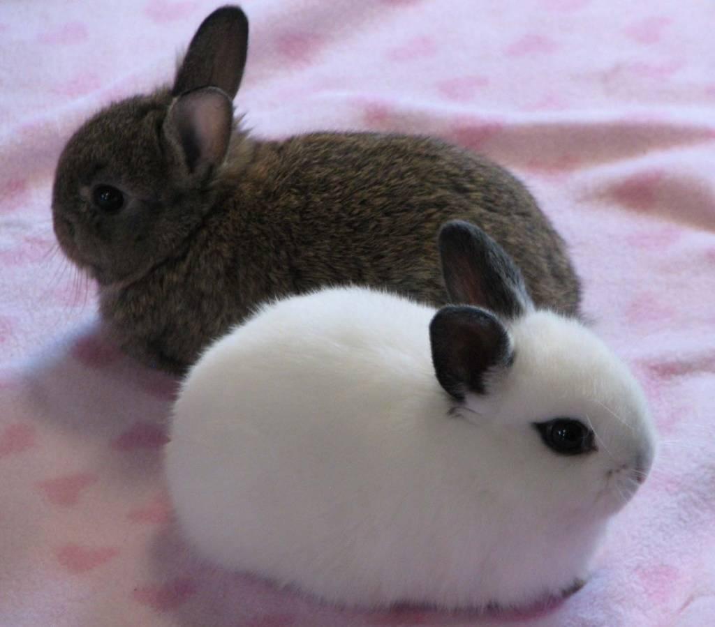 Инфекционный стоматит.   кролики. разведение и содержание в домашних условиях