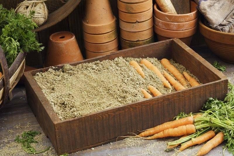 Как хранить морковь в погребе зимой: в пакетах, опилках, луковой шелухе... 8 разных способов.   красивый дом и сад