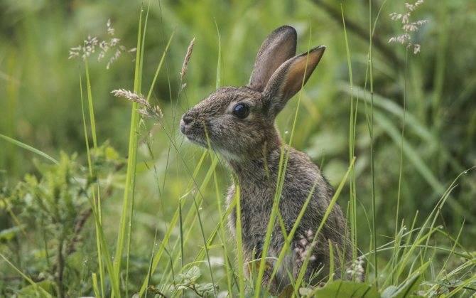 Чем питаются зайцы в природе - мыдачники
