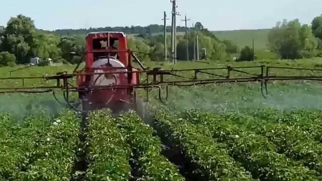 Как происходит посадка картофеля в гребни, гребневая посадка
