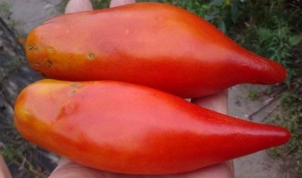 Томат перцевидный: описание и самые популярные сорта