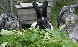 Разрешенные и запрещенные виды кормов для кроликов
