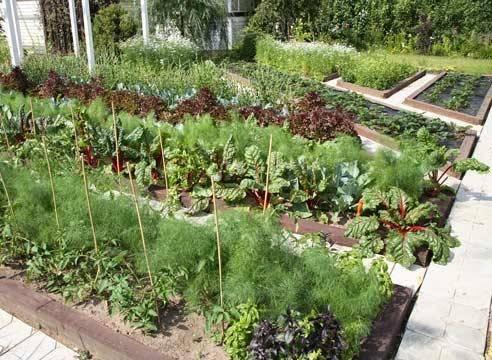Выбираем соседей на овощной грядке. план посадок. фото — ботаничка.ru