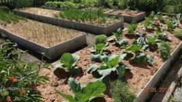 Опилки для огорода: польза (5 факторов) и возможный вред, какие выбрать, особенности использования, отзывы