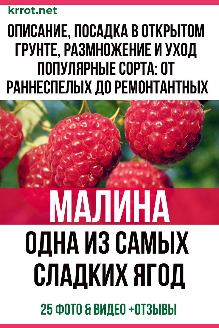 Малина киржач описание сорта фото отзывы | ваши поделки.ру