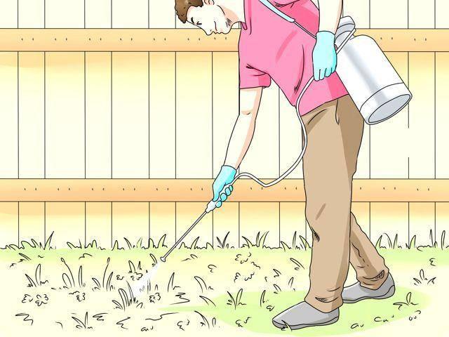 Уксус и соль против сорняков: пропорции, рецепты, обработка, отзывы