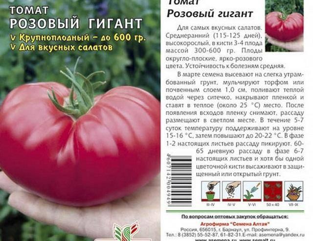 Описание и правила выращивания томата розовый гигант