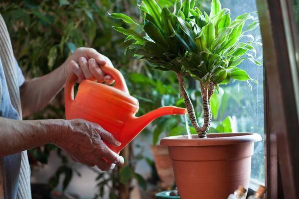 Удобрение из дрожжей: как использовать дрожжи для подкормки растений - почва.нет