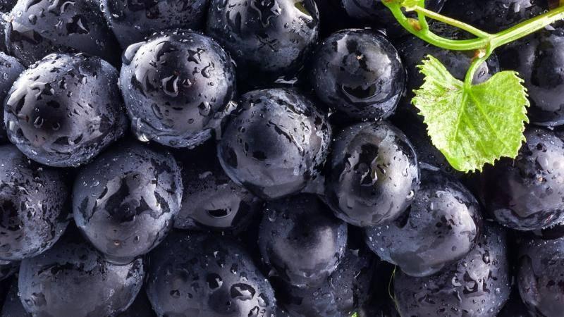 Смородина селеченская: описание сорта, выращивание, фото
