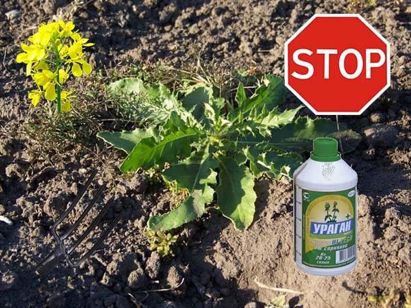 Как легко избавиться от сорняков и травы навсегда народными средствами