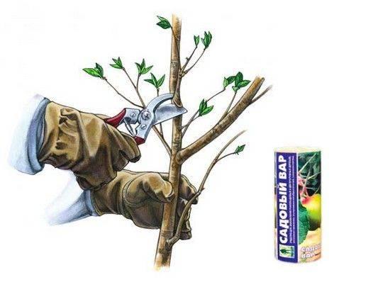Как пользоваться садовым варом для обработки деревьев при обрезке