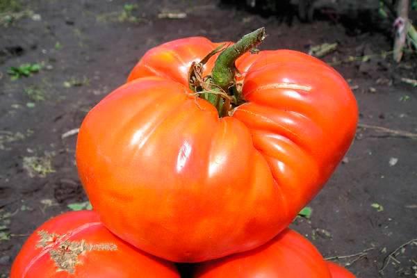 Гибрид жонглер f1: детальное описание томата, достоинства, отзывы садоводов