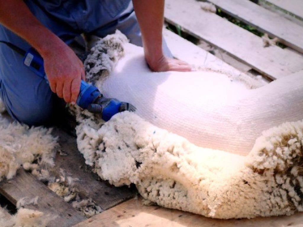 Машинка для стрижки овец: ножи для стрижки, как подстригать овец