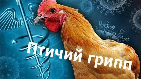 «птичий грипп». как его избежать? - памятки для населения - управление роспотребнадзора по республике марий эл