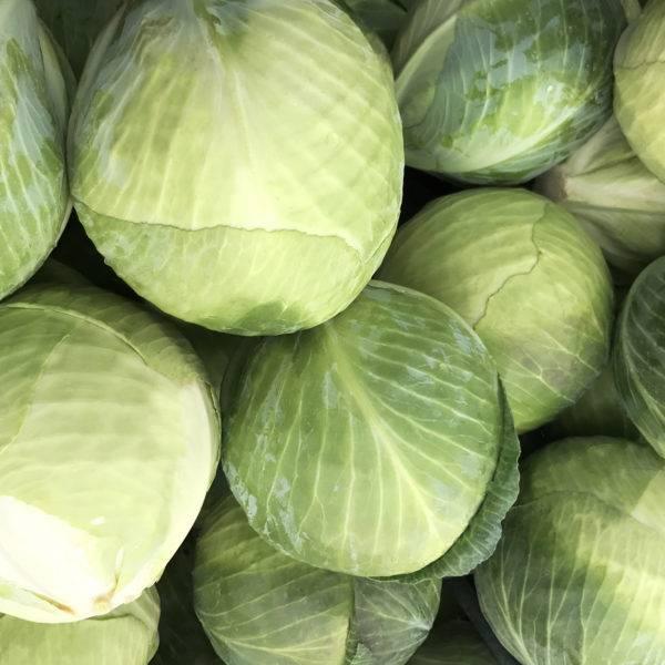 Суперранний сорт с удивительно вкусными плодами — капуста прайверд f1: правила выращивания и описание
