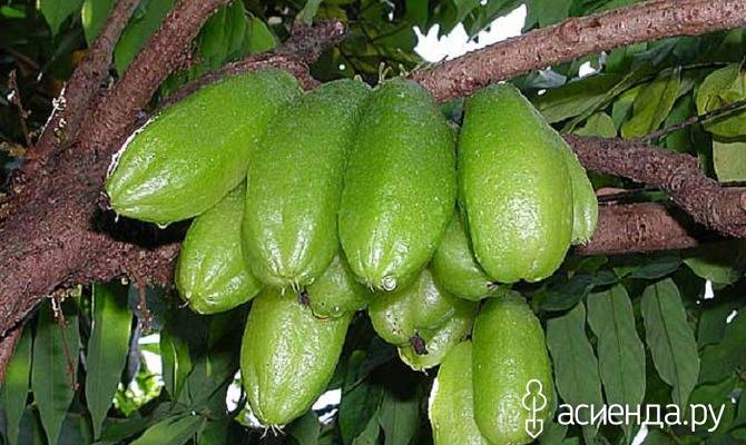 Необыкновенные фрукты со всего мира (часть 4)