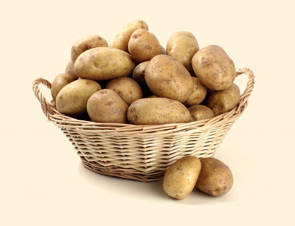 Выращивания картофеля из семян   (фото & видео) +отзывы