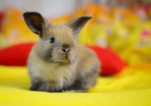Советы начинающим по содержанию и выращиванию кроликов в домашних условиях