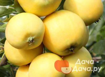 Яблоня уральское наливное – 8 особенностей и 10 советов по посадке и уходу