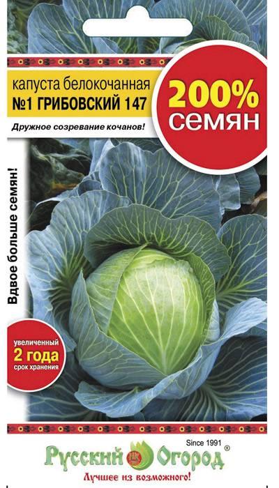 Капуста слава грибовская 231: отзывы, описание белокочанного сорта и характеристика