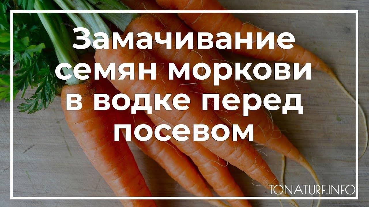 Морковь в водке: для чего нужна обработка с помощью алкоголя, можно ли ускорить прорастание, как замочить семена перед посадкой, чтобы быстро взошли, когда посеять? русский фермер