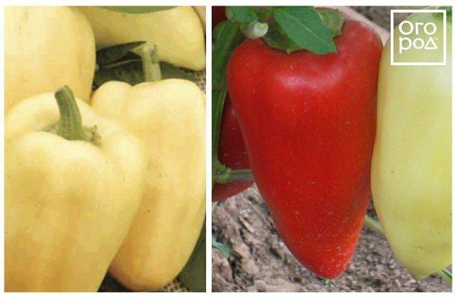 Характеристика сорта перцев зорька - журнал садовода ryazanameli.ru